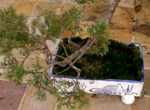 Bonsai dish
